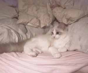 cat, ピンク, and ホワイト image