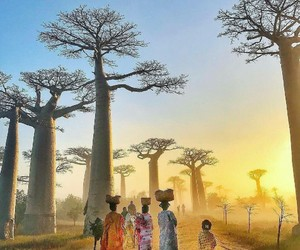 africa, nature, and baobab image