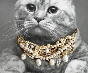 cat, gold, and pearl image