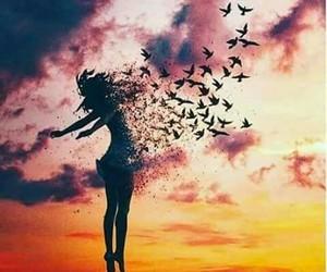 bird, free, and sky image