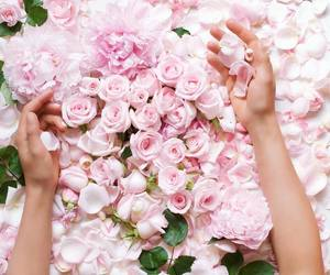 pink, roses, and whitherevolution image