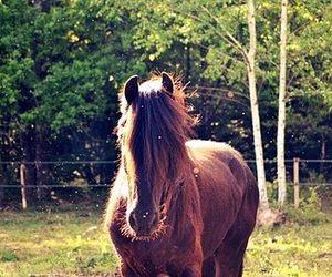 animals, horse, and autumn image