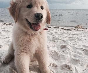 dog, animal, and puppy image