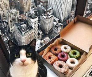 cat, city, and donuts image