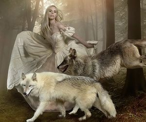 animals, dark, and dress image