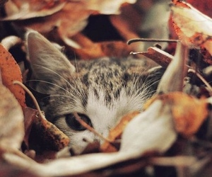 Autumn - 10 Things To Do