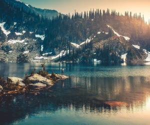 beautiful places, forest, and nature image