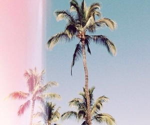 summer, palms, and photography image