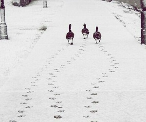 snow, winter, and duck image