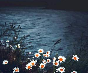 flowers, daisy, and river image