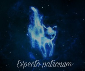 cat and expectopatronum image