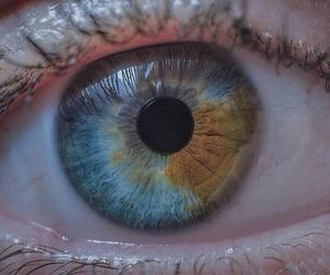 brown, eye, and eyes image