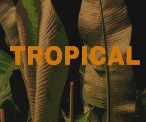 theme, plants, and tropical image