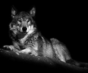 animal, black and white, and beautyful image