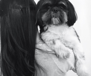 dog, hear, and pets image