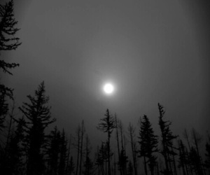 forest, moon, and night image