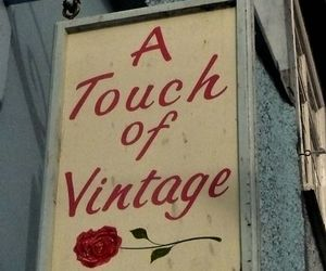 vintage, rose, and aesthetic image