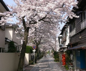japan, street, and cherry blossom image