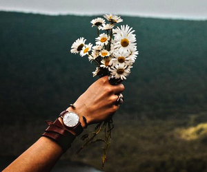 flowers, photography, and tumblr image