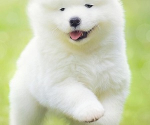 dog, cute, and huzky image