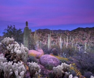 purple, cactus, and desert image