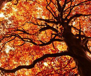 autumn, fall, and tree image
