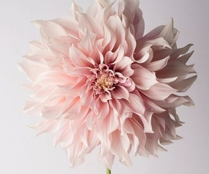 flower, pastel, and pretty image
