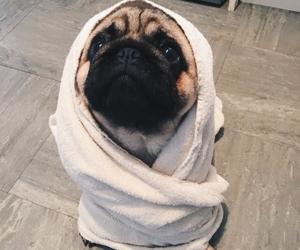 aesthetic, pug, and tumblr image