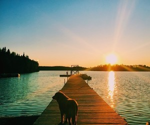 dog, animal, and sunset image