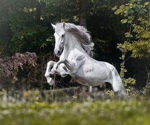 весна, лошадь, and красиво image