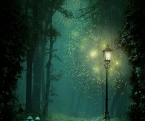 forest, light, and night image