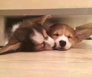 adorable, animals, and buny image