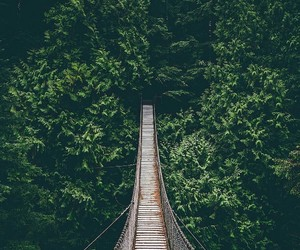 bridge, forest, and tree image