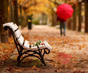 leaves, photography, and red umbrella image