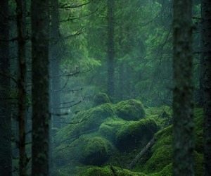 background, forrest, and green image