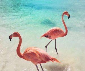 flamingo, summer, and pink image