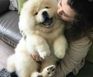 animals, chow chow, and puppy image