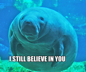 manatee and cute image