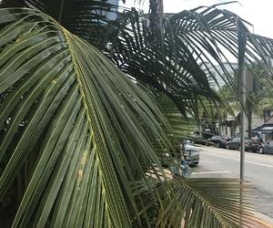 beach, florida, and fun image