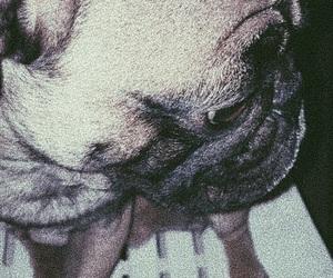 pug and puglife image
