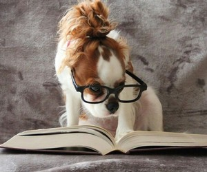 animal, book, and dog image