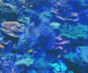 aquarium, purple, and blue image