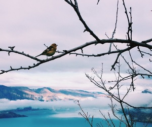beach, bird, and trip image