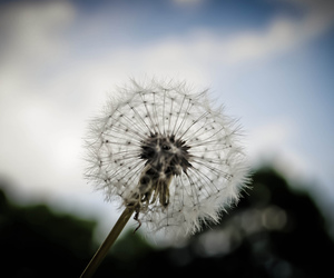 close up, dandelion, and field image