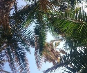 beach, nature, and palm image