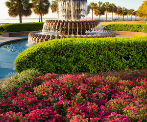 charleston, gardens, and landscape image