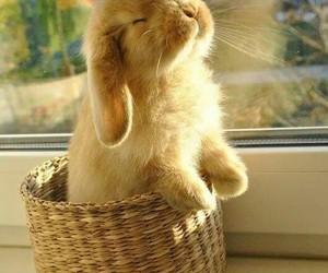 animal, brown, and rabbit image