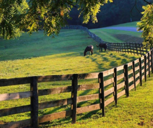 animal, country, and farm image