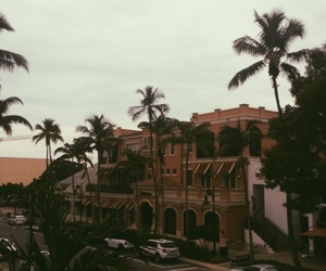 autum, Naples, and palm trees image