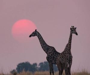 africa, amazing, and animal image
